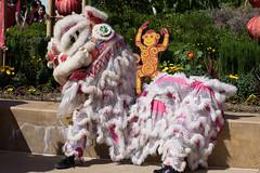 _DSC6651 (Confucius Institute at SDSU) Tags: dragon leah chinesenewyear brush cny erhu confucius teaceremony calligraphy lunarnewyear abacus taiji hulusi lny guzheng taiqi piatt whitedragon liuyi confuciusinstitute siufong mrcao cisdsu rogercao leahmarkworth 6arts siufongevans kuaiban piattpundt hanlaoshi