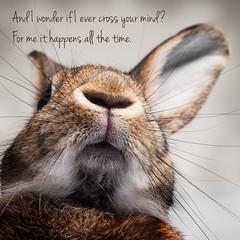 Need You Now (Jeric Santiago) Tags: pet rabbit bunny animal lyrics song conejo lapin hase kaninchen   ladyantebellum winterrabbit needyounow