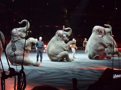 elephants circus performing ringling ringlingbrothersbarnumandbaileycircus