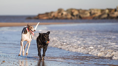New Friends. (Marcus Legg) Tags: blue friends sea pets black max beach dogs water canon ball eos sand rocks running blacklabradorretriever magicdrainpipe ef80200mmf28l 1dmarkiv marcuslegg