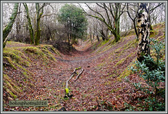 A Nice Little Cutting Between The Trees (bokosphotos) Tags: trees woods cows panasonic christmasdecorations cutting trials aldershot hungryhill yearly trialsbikes pre65 motorcycletrials talmag panasonicgh3 dmcgh3 1235f28lens talmagtrial2016 hungryhillaldershot