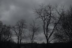 Rainy Days (Day 39/366) (iamtony97) Tags: trees white black rain clouds photo day silhouettes rainy 365