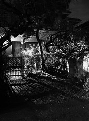 a gate with plum trees (MEG/TYO) Tags: blackandwhite bw japan tokyo olympus ikebukuro       xz10