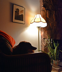 Relaxing After Exercise (Jo Zimny) Tags: lamp silhouette chair room resting relaxed ddc 1654 afterexercise