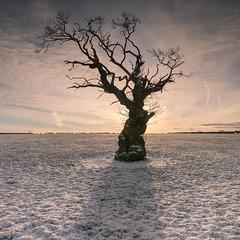In The Shadow (.Brian Kerr Photography.) Tags: winter shadow sunlight snow tree sony cumbria dalston briankerrphotography briankerrphoto sonypro sonyuk wwwbriankerrphotographycom a7rii