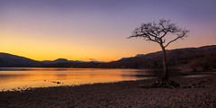 The Lone Tree, Milarrochy Bay (MilesGrayPhotography (AnimalsBeforeHumans)) Tags: uk longexposure winter sunset sky tree skyline canon reflections landscape outdoors photography eos golden evening scotland rocks europe glow britain dusk scenic nd loch iconic ef lochlomond lonetree westhighlandway waterscape 6d f4l nighfall canonef24105mmf4lisusm milarrochybay canon6d milarrochytree