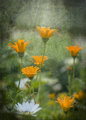 For International Women's Day (zaid.sp14) Tags: flowers 50mm spring nikon with background textured d610