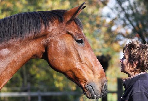 Horses Insight  (27)