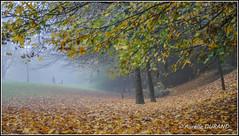 Splendeur d'Automne (Aurlie_D) Tags: autumn automne landscape leaf 300views 1855mm paysage feuille mcon 25favs 25faves nikond3000 rallyephotomcon