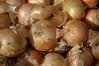 Onions Calibra