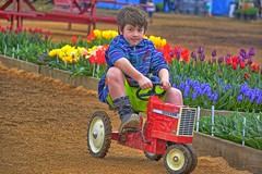 I Think I can.... (Kirt Edblom) Tags: red usa tractor green festival kids oregon toys outdoors march nikon child tulips outdoor overcast wife hdr johndeere tulipfestival woodburn kirt 2016 woodenshoetulipfestival gaylene woodburnoregon easyhdr edblom nikond7100 kirtedblom