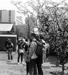 HIGH DENSITY (Dinasty_Oomae) Tags: street blackandwhite bw monochrome tokyo blackwhite outdoor  cherryblossom sakura  zeissikon asakusa  taitoku         supersix