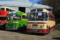 Weymann Fanfare (PD3.) Tags: bus london buses museum wales vintage spring coach south tiger transport surrey gathering trust cobham annual preserved preservation leyland psv pcv fanfare brooklands 626 weymann ncy 2016 aec cubb southdown ncy626 lbpt