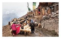 Pictures from Pangi Valley (PTC88) Tags: india mountains hills himalayas kishtwar ind jammuandkashmir