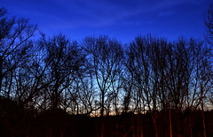 Dusk Along the Treeline (dr_marvel) Tags: blue trees night dusk branches treeline