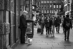 It's Not Mine! (Leanne Boulton) Tags: life street city uk light shadow portrait people urban blackandwhite bw dog pet white man black detail cute male texture monochrome face look animal canon 50mm mono scotland living blackwhite funny eyecontact humorous natural emotion humanity outdoor expression glasgow candid character culture streetphotography streetlife scene humour human shade tiny 7d feeling embarrassment pooch society depth tone facial toydog candidportrait candidstreetphotography candideyecontact