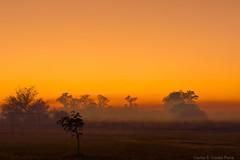 Otoo - Amanecer (Carlos E Corts Parra) Tags: autumn orange fog sunrise landscape paisaje amanecer otoo neblina naranja