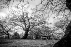 Hitsujiyama Park (ShiroWengPhotography) Tags: park travel blackandwhite white black leaves japan landscape photography koen saitama tau 2016 hitsujiyama shiroweng