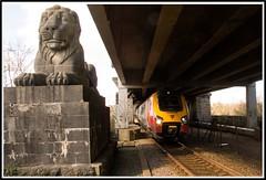 Afternoon nap! (peterdouglas1) Tags: lions voyager virgintrains menaistraits britanniabridge 1a48