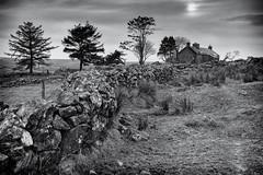 Ditsworthy Farm House (GDWilson1000) Tags: bw horse house stone wall war farm dry devon bleak derelict dartmoor ditsworthy