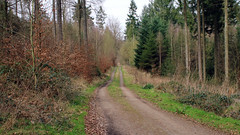 Wanderung durch den Klt (DeeDee Pix) Tags: trees tree forest trekking track path trail turm wald bume wandering baum weg wanderung pfad waldweg hameln 2016 klt deedeepix hausberg finkenborn