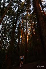 _AKU7079 (Large) (akunamatata) Tags: california sunset berkeley miller trail joaquin joachim