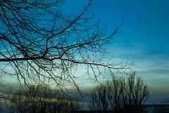 Evening colours of spring (Ariadni's Thread) Tags: sunset sky lake clouds copenhagen denmark spring swan colours horizon scandinavia expat eveningcolours romanticsunset nordichorizon sunsetdenmark romanticsky nordicsky lakecopenhagen sunsetincopenhagen expatindenmark greekincopenhagen