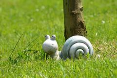 Au pied de mon arbre, je vivais heureux... (maxguitare1) Tags: france snail lumaca escargot caracol gard trinket gingillo cagouille baratija bobelot