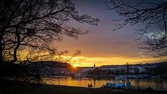 Sunset at the Danube (karlbauernhansl) Tags: trees sunset orange yellow reflections linz austria sterreich sonnenuntergang gelb bume spiegelung baum danube donau upperaustria