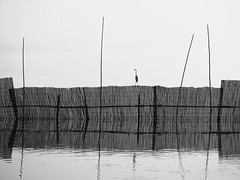 The Heron at U Bein Bridge (Feldore) Tags: heron water silhouette fence sitting burma bein olympus minimal panasonic u myanmar minimalism posts burmese mandalay em1 35100mm