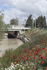 Paisaje con amapolas (Rosa Tom) Tags: puente canal agua amapolas ababoles