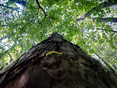 Around The World (lunat1k) Tags: travel macro tree green nature forest sofia lookingup adventure bulgaria tiny round trunk thecube worldtrip dreambig gopro wdeangle arountheworld goprooftheday goprotravel hero4session