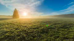 Brume matinale... (Emotions-photo.ch) Tags: morning trees sky tree green yellow fog clouds forest jaune sunrise spring suisse vert bleu ciel arbres fribourg nuages printemps sunbeam fort ch sunray brume herbe matin marsens