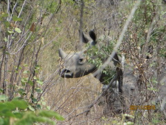 Zimbabwe (195) (Absolute Africa 17/09/2015 Overlanding Tour) Tags: africa2015