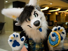 PC070424_asheswolf (Kakurady) Tags: white furry wolf donut plaid mff fursuit mwff midwestfurfest furfest