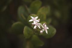 Raindrops (whitneybee) Tags: natureycrap