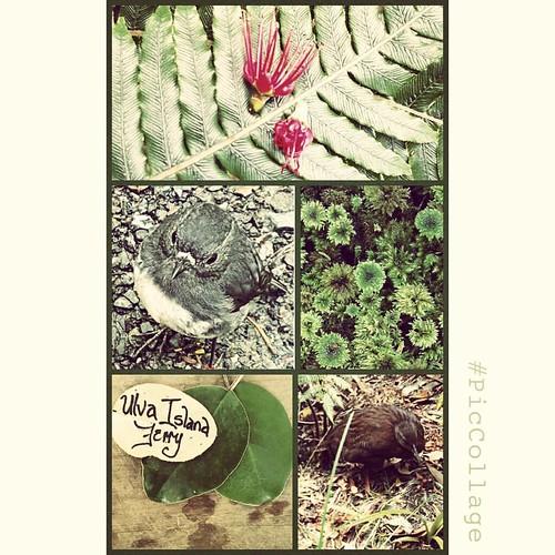 Postcard from Ulva #ulvaisland #rakiura #summerholiday #southernroadtrip