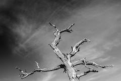 dead tree (Davicl) Tags: bw mort polarizer arbre sranon afl1759
