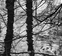 II (p.franche) Tags: wood brussels blackandwhite reflection tree leave blanco water monochrome mirror eau europe belgium belgique noiretblanc negro bruxelles panasonic reflet ii dxo miroir brussel zwart wit reflexion arbre hdr schaarbeek schaerbeek bois feuille onde vibration  belge schwarzweis mustavalkoinen inbiancoenero svartochvitt parcjosaphat josaphatpark  bestofbw fz200  pascalfranche pfranche skancheli