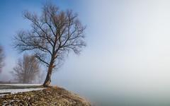 lake Zajarki (51) - foggy morning (Vlado Ferenčić) Tags: lakes winter wintermorning foggymorning foggy fog lakezajarki zaprešić hrvatska croatia nikond600 nikkor173528 vladoferencic vladimirferencic