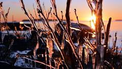 A December sunrise in Skatanluoto (Uutela, Helsinki, 20151228) (RainoL) Tags: morning winter sea seascape sunrise finland geotagged helsinki december helsingfors fin waterscape vuosaari uusimaa 2015 nyland nordsj d5200 nybondas 201512 skatafjrden skatanselk skatanluoto skataren 20151228 geo:lat=6019983770 geo:lon=2518793285