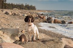 Me & water (Flemming Andersen) Tags: dog beach dogs water denmark hund dk hurup winther hurupthy northdenmarkregion helligsvej
