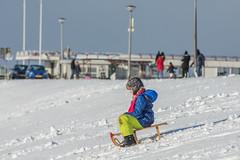 20160116-3169 (Sander Smit / Smit Fotografie) Tags: winter sneeuw delfzijl sneeuwpret slee winterweer