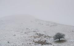 A Lonely Landscape (.Brian Kerr Photography.) Tags: winter snow tree landscape scotland sony hawick scottishborders scottishlandscapes sonyalpha briankerrphotography briankerrphoto sonypro sonyuk wwwbriankerrphotographycom