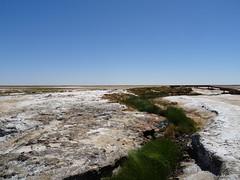 Wabma Kadarbu Springs DSC08739 Sth Australia (Iancochrane) Tags: australia outback southaustralia oodnadattatrack cowardsprings katithanda