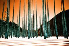 -Another Planet (Hodaka Yamamoto) Tags: winter shadow lake snow tree film forest river lomo lomography turquoise lomolca filmcamera filmphotography