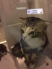 Alien cat (quimby) Tags: art museum cat gallery potteries