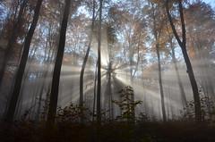 DSC_8701 ein Märchen beginnt... - a fairy tale begins ... (baerli08ww) Tags: autumn sun mist fog forest sunrise germany deutschland nebel herbst natur autumncolors sonne wald sonnenstrahlen morningsun rheinlandpfalz morgensonne westerwald herbstfarben rhinelandpalatinate westerforest