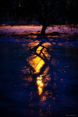night thoughts (alicebutenko) Tags: blue winter light cold reflection tree ice nature colors beauty mystery night gold warm shadows feel deep atmosphere dreamy lonely