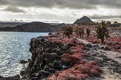 Vegetacin roja, Islas Plazas, Galpagos (sebastian crespo) Tags: ocean paisajes landscape volcano lava islands landscapes mar ecuador paisaje galapagos islas pacifico volcn galpagos